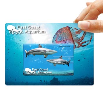 CreditCardFlashDriveonCustomBackingCard1Pos4CPDigitalDirectCard